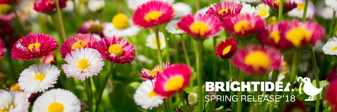 Brightidea Spring 2018 Release: The Early Bird Gets the Worm